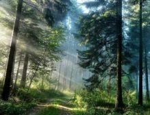 Piney Woods Overture - Harmonie