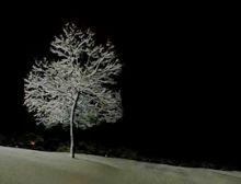 Silent Night - Harmonie